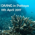 Fun Diving Pattaya 11th April